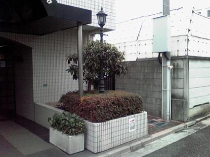 マンション花壇のサツキ