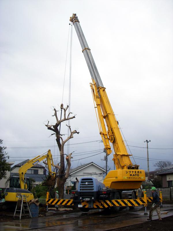 樹木移植3
