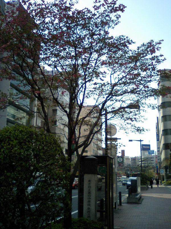 20100503hanamizukiaka