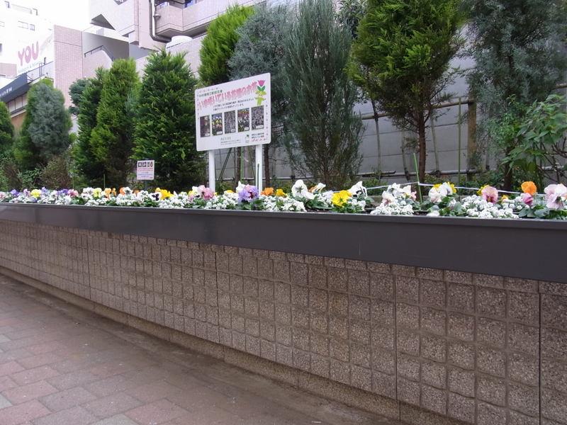 20101213flowerbed