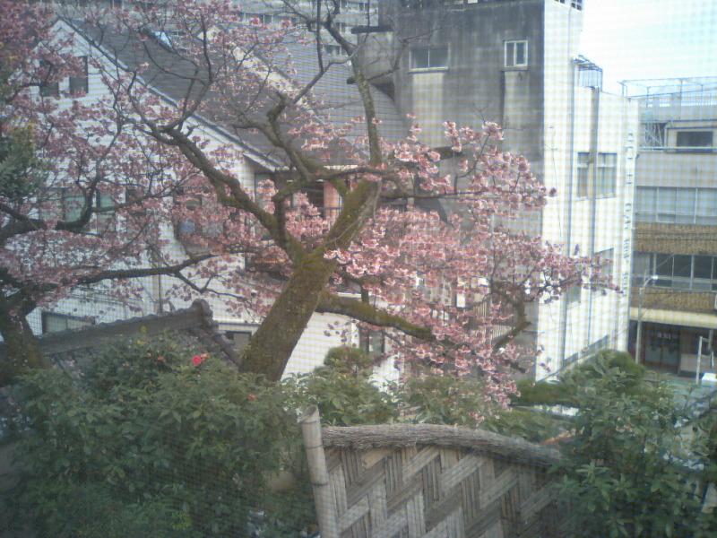 20110214sakura