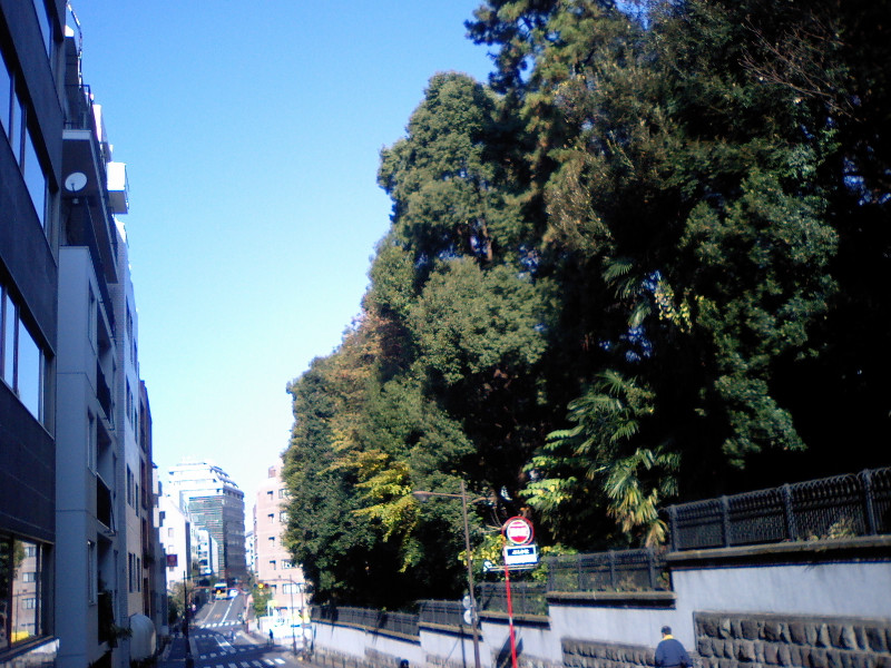 20111219midori1