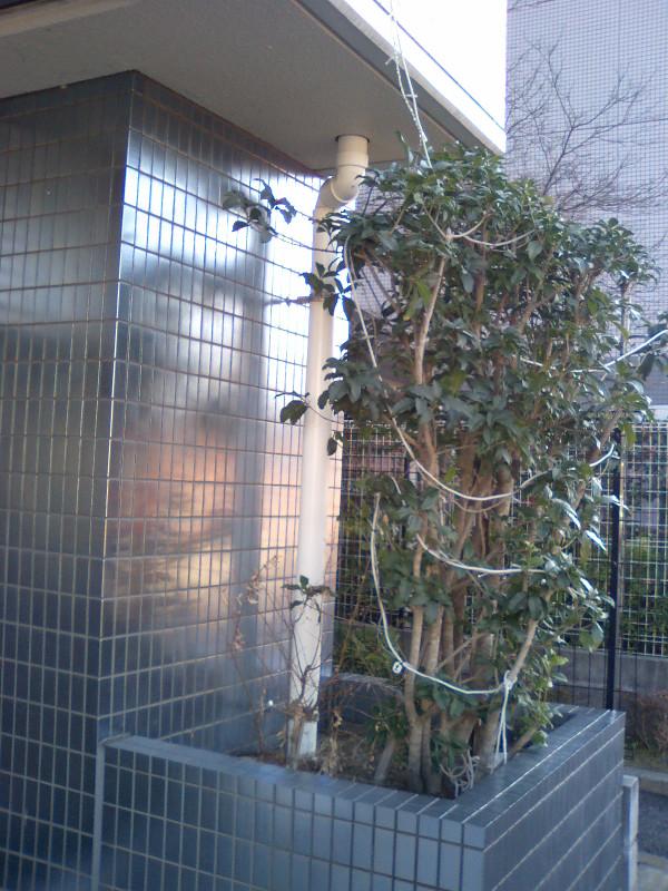 20120206amegakari