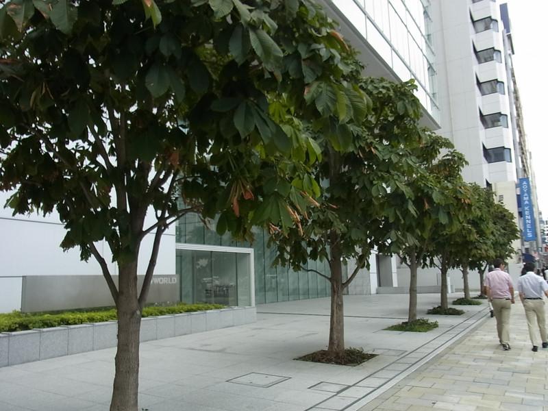 20120917tochi