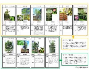 樹木写真・樹木特性表