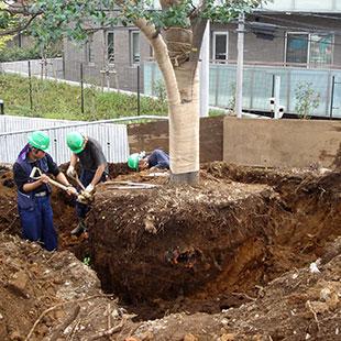 樹木の交換(安全確保)